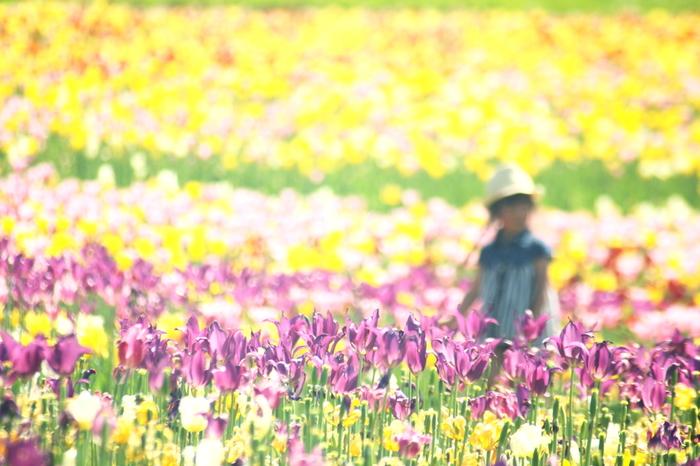 札幌の中心部から真南へ約15kmの場所にある「国営滝野すずらん丘陵公園」。 ここは北海道唯一の国営公園で面積は395.7ha、東京ドーム85個分の面積に相当。広大なため、公園は4つのエリアと6つの駐車場に分かれています。 この公園は、1年中を通して大人も子供も楽しめるのが魅力。夏には花が咲き乱れ、新緑、野鳥のさえずり、小動物との出会い…そして、子供を安心して遊ばせることの出来る豊富な遊具なども揃っているので、家族でゆっくりのんびり一日中過ごしても遊び切れないほどの充実ぶりです。 冬は歩くスキーや子供でも安心して滑れるゲレンデ、国内最大級の200mもの長さのチューブ滑りなどがあり、お子様連れのファミリーなどにぴったりのスポットです。