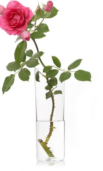注意したいのが水の量。つい花瓶一杯に入れてしまいがちですが、水を吸収するのは切り口で茎は水に浸かると腐りやすくなるため、このように控えめにしておく方が長持ちします。