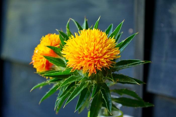 紅花やスターチスといったドライフラワーになるお花は、萎れたり退色しないので管理が楽でおすすめです。