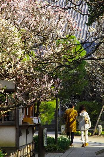 鎌倉駅から徒歩約13分でアクセスできる「宝戒寺(ほうかいじ)」。鶴岡八幡宮からは歩いて10分程度で行くことが可能です。1333年に北条氏滅亡に伴いその霊を弔うために建立されたと伝わっています。