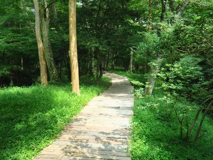 """今記事の旅の目的は、""""豊かな自然に身をおくこと""""です。 美術鑑賞後は、敷地内の「森の遊歩道」を歩いてみましょう。全長670mの遊歩道は、ゆっくりと歩いて20分程。鑑賞後や食後に軽く歩くのに丁度良い距離です。【「ポーラ美術館」森の遊歩道。8月中旬撮影】"""