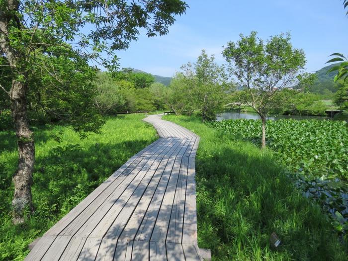 果なく続く空の下には、山々が連なり、木々や草花覆われた台地が広がっています。【5月初旬頃の「箱根湿生花園」】
