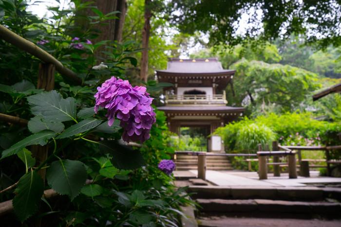 さまざまなドラマや映画のロケ地としても知られる鎌倉。おしゃれな女子から人気が高いお店も多い街なので、日帰り観光で訪れる人も多いことでしょう。そんな鎌倉・江ノ島で、いつもとはちょっと違う観光をしてみてはいかがでしょうか。鎌倉・江ノ島の七福神を巡り、それにあわせ御朱印をいただく旅のご提案です。ぜひこれから紹介する七福神様に会いに鎌倉、江ノ島を訪れてみてくださいね。