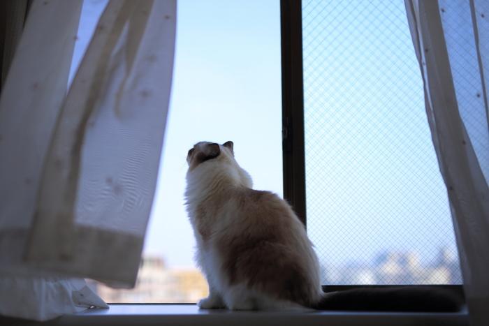 暑い夏に外から吹き込んでくる涼しい風は、心地の良いものですよね。そんな夏の気持ち良さを満喫するために、まずは『窓ガラスと網戸掃除』をしてみましょう!