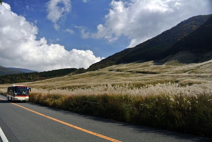仙石原へ都心部から向かう場合は、小田原駅や箱根湯本駅を経由して路線バスを利用するのが一般的です。 【11月初旬の頃の「すすきの草原」と箱根登山バス】