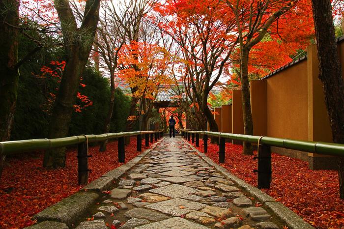 光悦寺の見どころはなんといっても、まっすぐ伸びた参道。紅葉の時期を迎えると頭上はもちろん、足元も朱色に染まります。紅葉が真っ赤に染まる前の、グリーンと黄色のグラデーションもまた違った美しさなので、訪問出来るタイミングの紅葉を楽しんでくださいね。