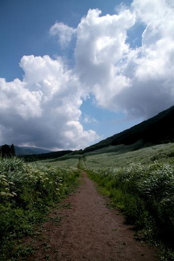 本来は、ススキの穂が開く10月上旬から11月中旬頃が見頃ですが、初夏から夏の青々とした草原も、高原らしい爽やかな景色を生んで、美しいものです。湿原とともに、是非とも訪れたい仙石原の名所です。