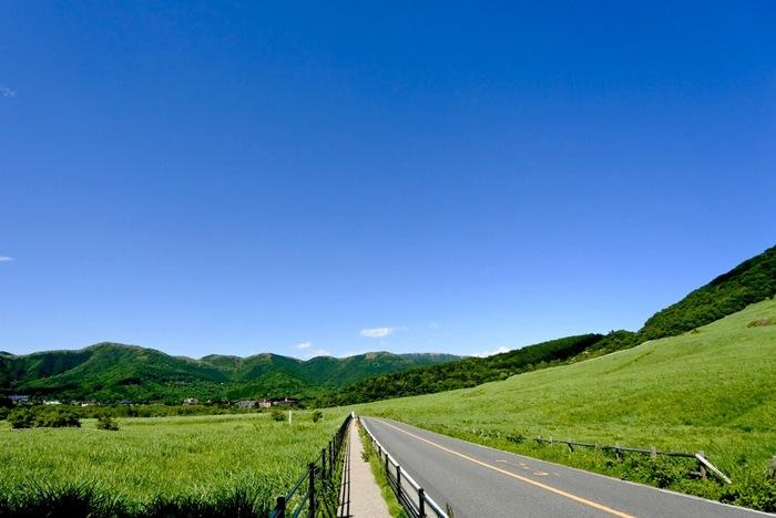 「仙石原」を訪れるのなら、「仙石原湿原植物群落」へ、ぜひ足を運んでみましょう。  「仙石原湿原」は、かつて箱根火山の火口原湖が湿原化した名残です。神奈川県内にただ一つ残る貴重な湿原で、その一部は、天然記念物にも指定されています。一年を通じて低温多湿の環境は、豊かな生態系を育み、現在でも多様な湿原植物、植物群落を観ることが出来ます。【6月初旬の「仙石原植物群落」と「仙石原すすき草原」。】