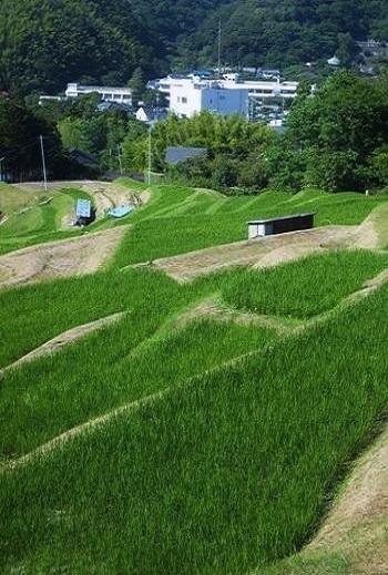 山あいに関東では稀少な「上山口の棚田」が広がります。  《葉山》から「逗子11」《葉山大道》で逗子駅ゆきのバスに乗り換え、《上山口(かみやまぐち)小学校》下車。