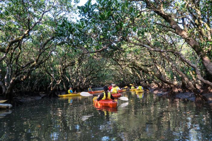奄美大島に訪れたら、ぜひ訪れてほしいスポットのもうひとつが、「マングローブ原生林」です。マングローブとは、亜熱帯地域にある湿地帯、干潟にある植物のこと。「マングローブ原生林」では、その存在感に圧倒されること間違いなしです。せっかくならカヌーのツアーに参加してその姿を間近で見てみましょう。半日もあれば参加できるコースが多いうえ、カヌーは初心者でも挑戦しやすいアクティビティ。せっかく奄美大島に訪れたなら、チャレンジしてみるのもアリです!