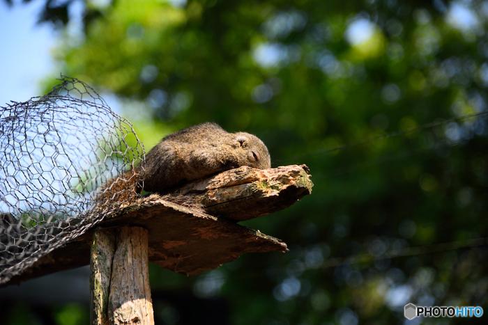 リスの食べるシイの実やドングリの実が豊富な金華山は、他に天敵も少ないため、リスの環境に大変良く、今でも多数生息しています。これら金華山の野生のリスを、そのままの状態で自然の中で子供たちと遊ばせたいと願い、長い年月をかけて調教してできたのが「リス村」です。