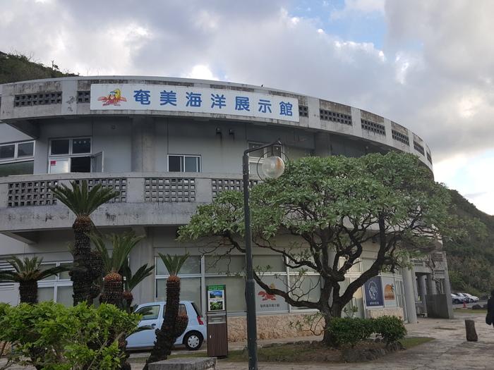 奄美空港からバスで約50分。奄美市名瀬にある大浜海浜公園を奥へと進んでいくと、「奄美海洋展示館」があります。ここでは、奄美大島に生息している海の生き物が飼育されています。暖かい浅い海に生息するオニダルマオコゼや、日本にいるヒトデの中で最も大きい種類であるオオフトトゲヒトデなどが飼育されており、見ごたえたっぷり!