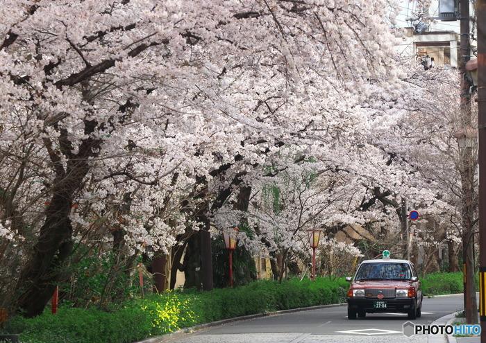 タクシーで観光となるとハードルが高く感じられますが、名所がコンパクトにまとまった京都では、意外にタクシーの移動がリーズナブルで便利。荷物をたくさん持って、お子さまを連れて、というのはなかなか大変。タクシーの運転手さんなら道にも詳しいので、バスよりも空いている道路を選んで目的地へ向かってくれるはず。