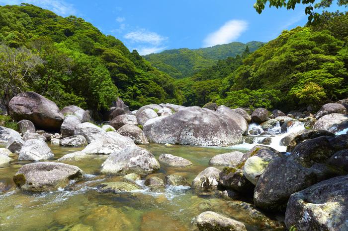 宮之浦港から車で約30分、清々しい空気を吸いに訪れたい場所が「横河渓谷(よっごけいこく)」です。水量と流れがある渓谷なので、水遊びなどは危険です。目で見て楽しむだけにしてくださいね。それでも癒される景色を堪能できるおすすめスポットですよ。