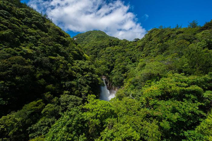 屋久島は美しい景観、植物の生態系などが評価され、1993年に世界自然遺産に登録されました。登録された世界遺産の面積は、島全体の約20%に及ぶ10,747ヘクタール。世界遺産に登録されてからは多くの観光客が足を運んでいます。島全体の大きさは、50,488ヘクタールで、車を利用すれば3~4時間程度で島の外周をまわることができます。