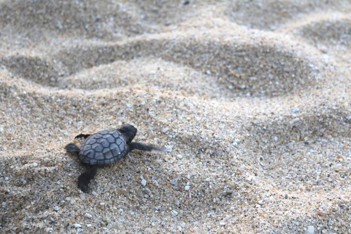「永田いなか浜」は、ウミガメの産卵地としても有名な場所です。5月から7月中旬頃の夜になると、アカウミガメが産卵をしに訪れます。ウミガメの産卵を見学するツアーも組まれているので、気になる方は参加してみてもいいかも。