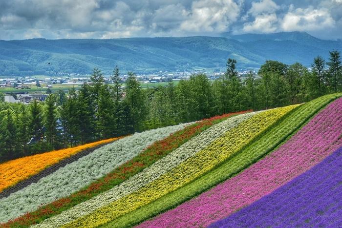 ラベンダーのほか多種多様な花々が植栽されているファーム富田の敷地は、まるで大地に舞い降りた虹のような風貌をしており、その美しさは思わずカメラに収めずにはいられないほどです。