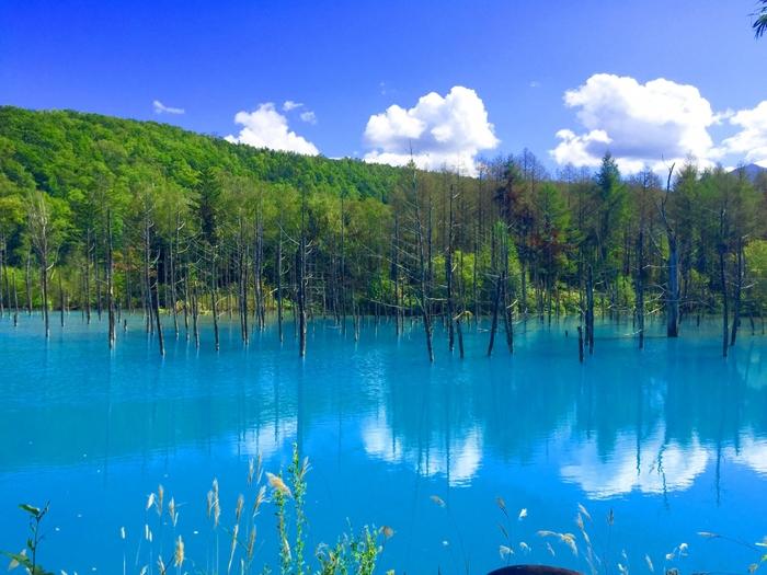 """真っ青というよりは、""""やさしい青""""で多くの人を魅了する池が、北海道の美瑛町にあります。  こちらの「青い池」、時間帯や天候によって、コバルトブルーに見えることもあれば、エメラルドグリーンに見えることもあるそうです。立ち枯れたカラマツも相まって、幻想的な雰囲気でいっぱい。  ちなみに""""青""""の秘密は、池の水に含まれる鉱物成分にあるそうですが、はっきりとした原因はまだ未解明とのこと。自然の神秘にも心が躍りますね。"""
