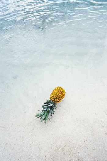 Photo by Pineapple Supply Co. on Unsplash