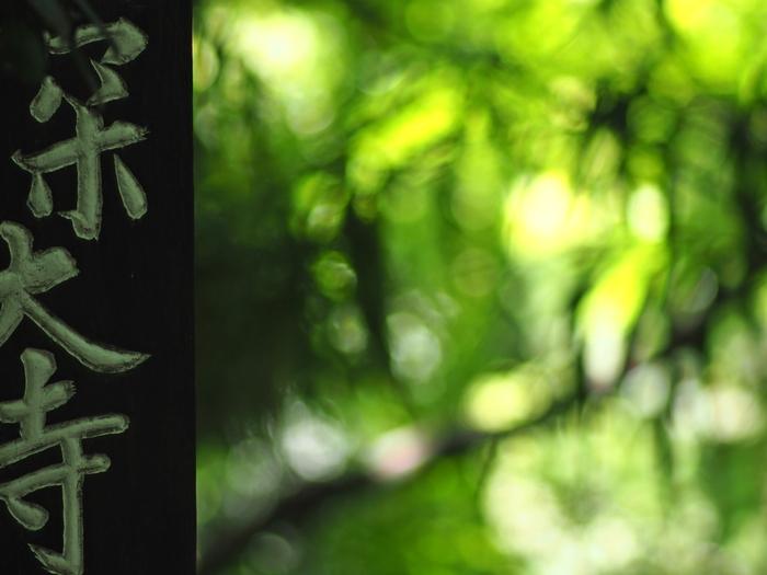 木々の間からこぼれる陽射し。一歩中に足を踏み入れると神聖な空気を体中で感じることができる場所。日々の喧騒を忘れてゆったりしたくなったらそんな場所を散策してみるのはいかがですか?東京都内とは思えないほどの静かで贅沢な時間を過ごせる深大寺とその周辺をご紹介します。