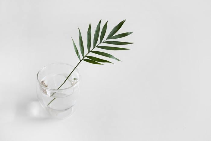 大柄な葉っぱを、さっとコップに入れただけ。それなのに、植物の生き生きとした躍動感を感じるディスプレイに。 一輪挿しがなくても、今あるもので誰でもできるカミワザです。