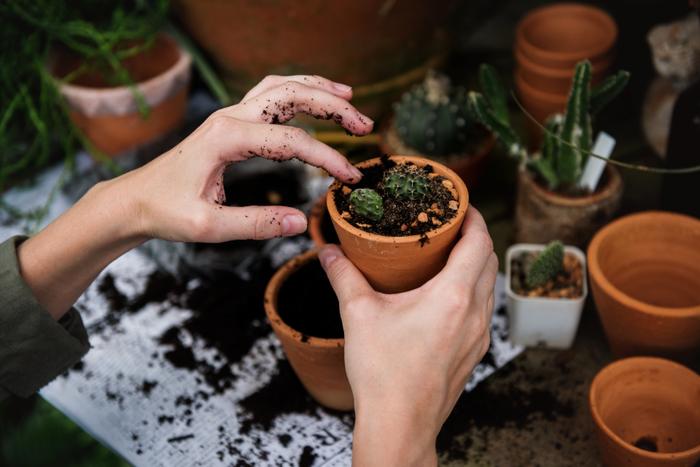 """セラピーの一環として取り入れられることもある""""ガーデニング""""。小さな命を慈しむ気持ちが芽生えると、人は深く癒されて、自尊感情が芽生えます。ベランダやお庭が整っていくにつれて、達成感も得られますよ。"""
