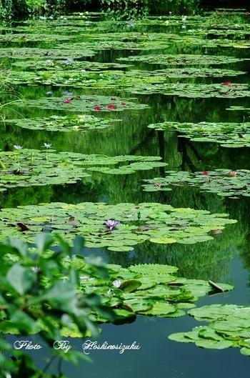 高知県は少し趣向を変えて、自然をアートとして捉えた場所をご紹介しましょう。北川村「モネの庭」マルモッタンは、印象派の巨匠クロード・モネが愛し、生涯の半分を過ごしたフランス・ジヴェルニーの庭園を再現しています。絵画や美術作品が展示されているのではなく、絵画になった風景が、ここにあるのです。