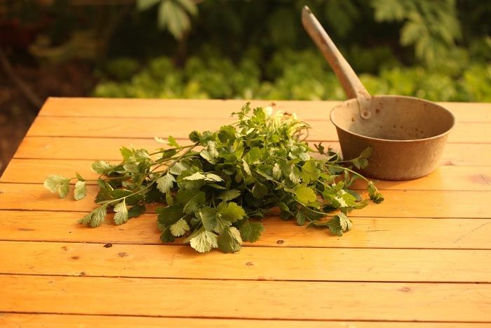 パクチーは体を健やかに保つ効果に優れた野菜で、古代ギリシアでは種子を薬として使っていたと言われています。老化防止や美肌効果などさまざまな効果があるなんて、嬉しいですね。
