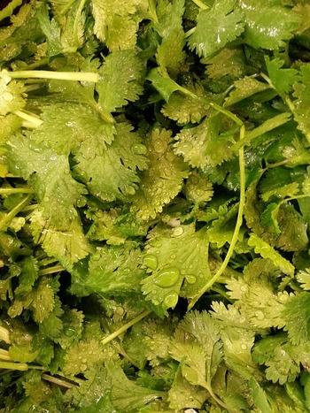 1週間程度で食べきることができるならば、野菜室でほかの野菜と一緒に保管できます。乾燥を嫌う野菜なので、カットしていないパクチーは根元を濡らしたキッチンペーパーなどで覆っておくと長持ちします。