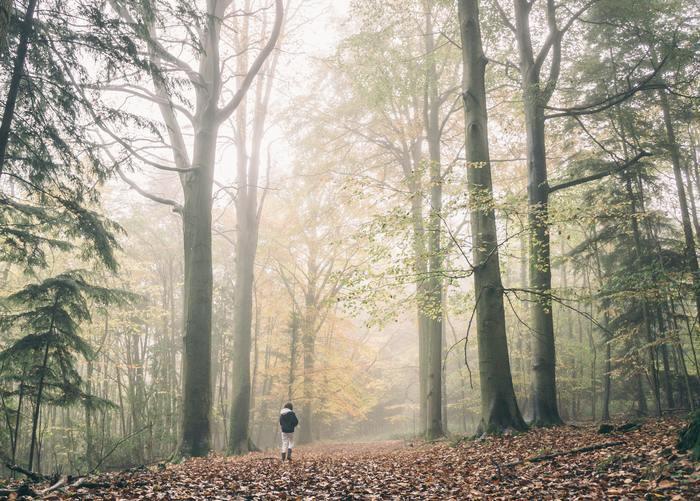 森の中を歩くと森林浴効果があるというように、自然に触れる時間を大事にしましょう。30分以上歩けば、有酸素運動に繋がって血流も良くなっていきますし、健康にも良いですね。