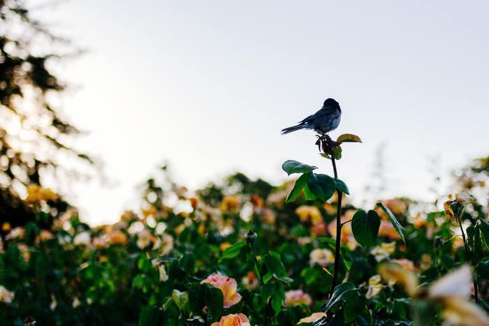 ひとり登山は、自分のペースで歩ける、自由に休憩を取れる、鳥や川のせせらぎなど自然の音がよく聞こえる、無理に会話をしなくていい、自分の心の声がよく聞こえるなど、メリットがたくさんあります。