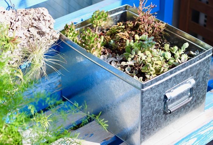 番外編として、こちらは多肉植物の寄せ植えのプランター代わりに「トタンボックス大」を使った大胆なアイデア。ベランダに置いて少し錆が出てきても、シャビーシックに楽しめそうです♪