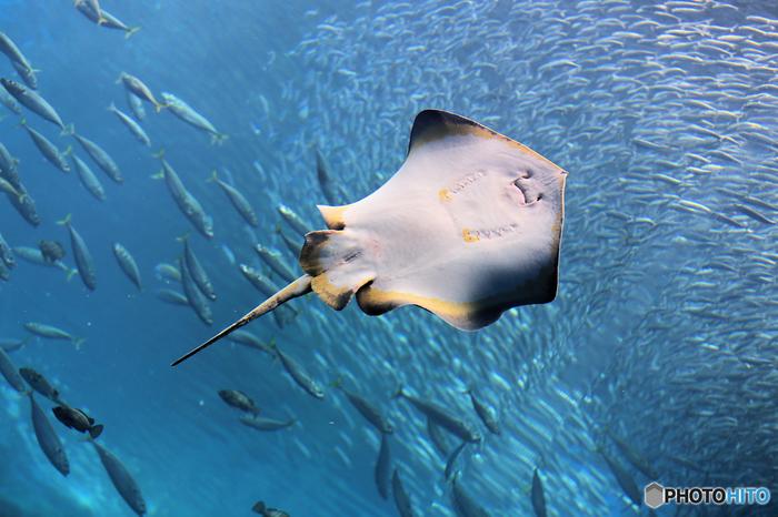 まだオープンして間もない「仙台うみの杜水族館」は、ただ魚たちを眺めるだけではなく体験して楽しめる水族館!館内には小さなビーチもあり、磯場で遊ぶように海の生き物たちとふれあうこともできるんです。