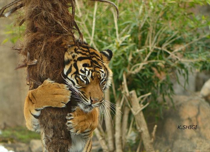 仙台にあるズーパラダイス八木山動物園は地下鉄東西線「八木山動物公園駅」で降りた目の前!動物たちととっても近くで会うことができ、身近に感じられる動物園です。