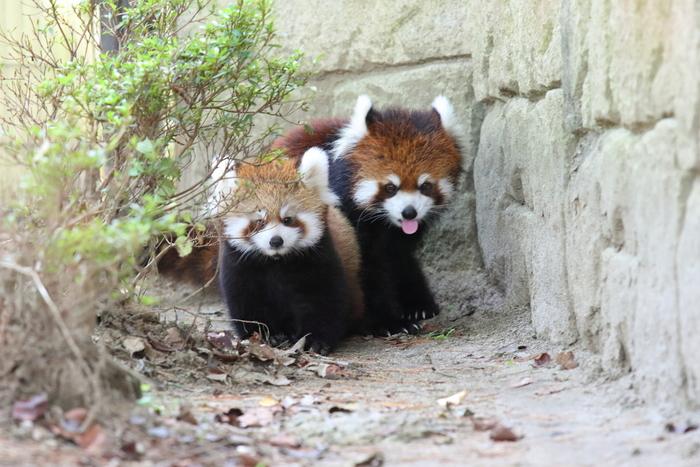 ふれあい館やレストラン「グーグーテラス」などはリニューアルされ、小さな赤ちゃん連れでも利用しやすい作りに。放し飼いされている動物も多く、他の県の動物園と違った魅力に子どもだけではなく大人も1日楽しめますよ。