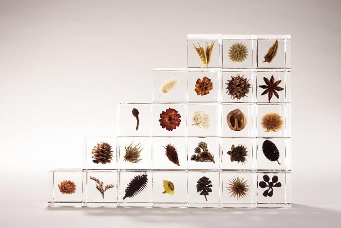 小さな植物が内包しているのは宇宙そのもの。 Sola cubeの「sola」は、「宇宙」を意味する「宙(そら)」から名付けられています。植物をじっと観察しているとイマジネーションの世界が「空(そら)」のように広がっていくという意味も込められています。