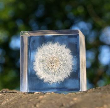 """今まさに飛び立とうとしている綿毛を閉じ込めた「タンポポ」。Sola cubeにはひとつひとつ""""宙言葉""""が添えられていて、タンポポは「風と生きる」。眺めていると、風に乗るようにふんわり自由に生きる勇気がもらえそう。"""