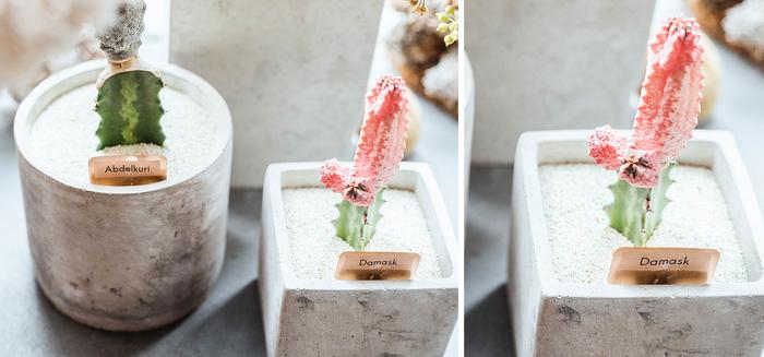 サボテンにささったネームプレート。銅板にラベルシールを貼って作っていて、植物が入れ替わった時は貼り替えさえすればOK。ベースの銅板は何度だって使えます。「商品はわりと頻繁に入れ替えるので、貼り替えが簡単なのはすごく便利」と前山さんは言います。  「P-TOUCH CUBE(PT-P710BT)」のラベルシールはラミネート加工が施されたものも多く、水に強い点が特徴。お花に水やりをする際も、文字がかすんだりシールが剥がれたり…ということを気にする心配がありません。 【テープ情報】文字色:黒 テープ色:透明 テープ幅:12mm