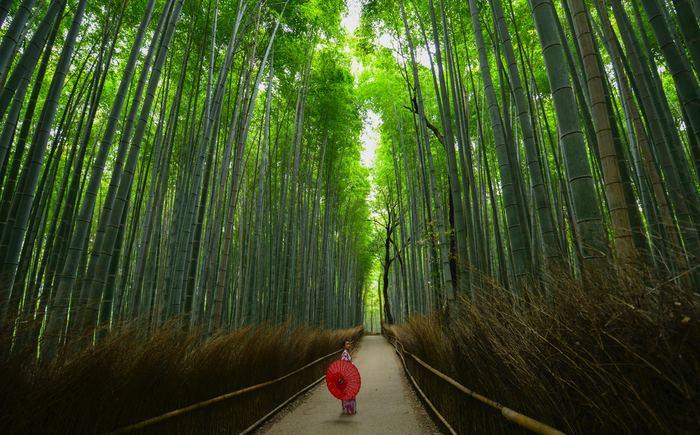 いかがでしたでしょうか?京都のサンドイッチには、パンをこよなく愛する京都人の思いと創意工夫がたっぷり詰まっています。ちょっとお値段がお高いものもありますが、他にはないスペシャリティを、旅行の記念として食べてみる試みは後から振り返ったときにとても良い思い出になると思いますよ。是非、京都グルメツアーのひとつにサンドイッチも入れてみてくださいね!