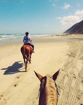 北島・オークランドから車で北に1時間半程の場所に、美しい砂浜の名所『パキリビーチ』があります。なんとその砂浜で、ホースライディングができます。初心者でも乗馬ができるように、丁寧に訓練された馬に乗って体験ができるので安心です。  牧場からスタートし、小道や森、川の中を通りぬけ、砂丘を抜けると美しいビーチが目の前に広がります。青く輝く海と砂浜のコントラストが素晴らしく、心踊りますよ!