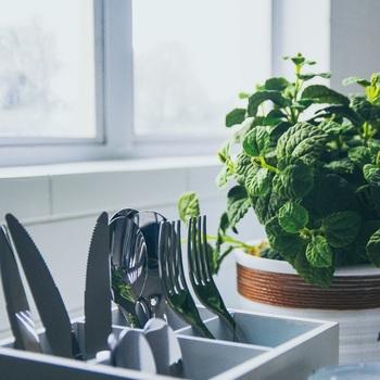 整理整頓ができたら、次はグリーンを置いてみましょう。 必要なものが必要な所に置いてある、無駄のない場所は素敵ですが、物足りなく感じる人も多いのでは? グリーンを1つ加えると、シンプルなキッチンの差し色になります。 スペースに余裕が出来たら、小ぶりなものを1つ置いてみるのがおすすめです。
