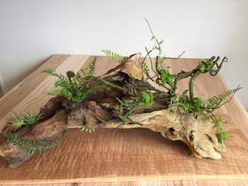 自然が作り出した素朴な流木に、グリーンをアレンジしたオブジェ。流木にグリーンが映えますね。和のお部屋にもぴったり◎