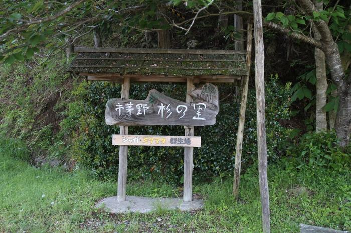 まずはこちら、水源の里・老富(オイトミ)というところにある「ミツマタ・ジャガの花の群生地」。この「市茅野杉の里」の案内板が目印です。