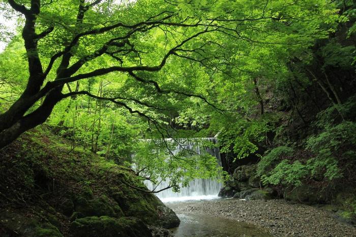 いかがでしたでしょうか?京都市内を観光して終わり!でもいいのですが、ちょっと遠出して京都の自然を感じてみるのもいいと思います。遠出と言っても中心地から1時間くらいですから、日帰りでふらりといける距離ですよね。奈良に行くのとそんなに変わりません!  綾部市には街にはない自然と静けさ、穏やかさがあります。ぜひ森のグリーンと自然のマイナスイオンに癒されてきてくださいね!