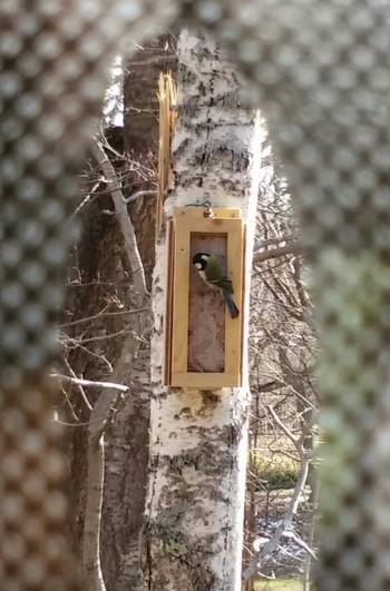 観察・撮影小屋も併設されていて、バードウォッチングや野鳥の撮影にも挑戦できます。鳥が警戒しないよう建物外壁には迷彩柄の網がかけてあり、ゆっくりと観察・撮影することができますよ。
