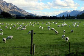 散策していると…、いたるところに牧場が!羊、ヤギ、馬、牛などと、触れ合ってみてはいかがでしょう♪乗馬体験できるところもありますよ。