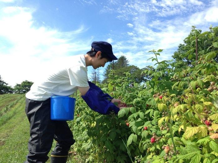 「フルーツの郷」として、古くからリンゴやさくらんぼ、ぶどうなどの産地として知られる余市町。「フルティコ」では、自社農園で栽培したブルーベリー・ラズベリー・ブドウをはじめ、地域の旬のフルーツをスイーツに仕立てています。