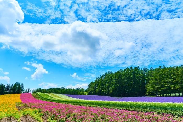 北海道だけでなく、日本を代表する観光名所である富良野は、北海道のほぼ中央に位置しており、美しいお花畑など景勝地の宝庫となっています。また、富良野一帯に広がる美しい丘陵地帯は、北海道の豊かな自然を受けた稔りの大地でもあります。今回は、そんな富良野でのおすすめレストランをご紹介します。