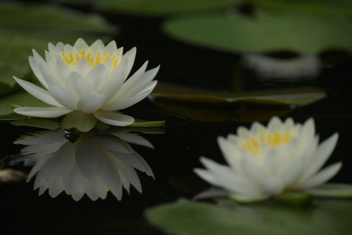 身近にある自然を愛し、季節の移ろいを楽しむ―そうした四季折々の美しさを味わう感性とともに、日本の暮らしは育まれてきました。時代とともに昔ながらの生活を実感することは難しくなりましたが、季節の変化を敏感に感じ取る、日本人らしい感性は持ち続けていたいですよね。自然を愛する気持ちは、日々の暮らしをより楽しく、豊かなものにしてくれます。