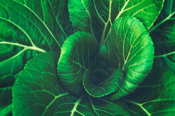 ビタミン、食物繊維、というとまず野菜の方を思い浮かべがちですよね。もちろん、健康維持のために緑黄色野菜を含む様々な野菜をしっかり摂ることは大切です。でも同じように、きのこ類も積極的に摂りたい食材。特に、食物繊維は、不溶性と水溶性、両方をバランスよく含んでいるところがすばらしいのです。現代人の腸内環境は不規則な生活や欧米化の食事で乱れがち。栄養豊富でヘルシー、そして家計にやさしい「えのき」をもっと活用しちゃいましょう!